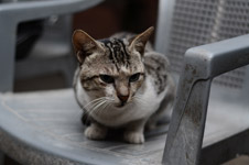 389-cat-sitting-on-chair - Public Domain Pictures