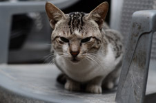 390-cat-sitting-whiskers - Public Domain Pictures