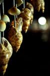 Sea Shells Decoration - Public Domain Pictures