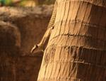Coconut Tree Squirrel - Public Domain Pictures