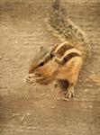 Squirrel Ground Beautiful - Public Domain Pictures