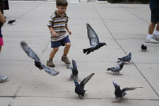 396-child-running-pigeons-flying - Public Domain Pictures