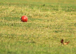 Cricket New Ball - Public Domain Pictures