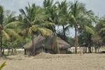 Hut Amid Coconut Trees - Public Domain Pictures