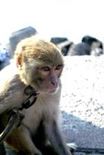 Animals Captive - Public Domain Pictures
