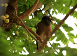Myna On Tree Branch - Public Domain Pictures