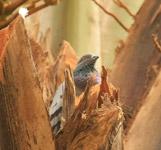 Pigeon Tree - Public Domain Pictures