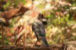 Black Crow - Public Domain Pictures