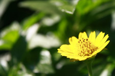 Yellow Flower Closeup - Public Domain Pictures