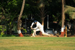 Batsman Stroke Cricket - Public Domain Pictures