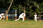 Cricket Sport - Public Domain Pictures