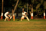Sports Cricket - Public Domain Pictures