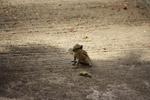 Cute Squirrel - Public Domain Pictures