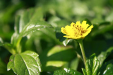 Yellow Flower Green Background - Public Domain Pictures
