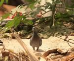 Pigeon - Public Domain Pictures
