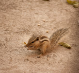 Squirrel - Public Domain Pictures