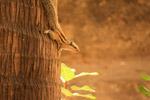 Squirrel Climbing Tree - Public Domain Pictures