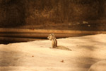 Squirrel Cute Animal - Public Domain Pictures