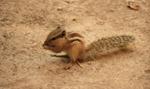 Squirrel Eating - Public Domain Pictures