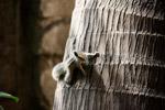 Squirrels - Public Domain Pictures
