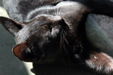 Black Cat Sleeping Position - Public Domain Pictures