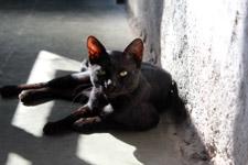 Cat Black Sitting - Public Domain Pictures