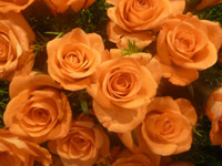 Bunch Of Orange Roses - Public Domain Pictures