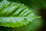 Ant Leaf Food - Public Domain Pictures