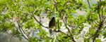 Bird Branch - Public Domain Pictures