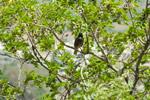 Bird Tree Branch - Public Domain Pictures
