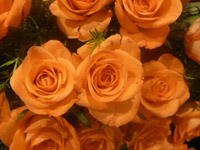 Orange Roses Bunch - Public Domain Pictures