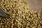 Coriander Seeds - Public Domain Pictures