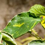 Green Leaf - Public Domain Pictures