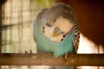 Love Bird - Public Domain Pictures
