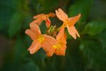 Orange Flower - Public Domain Pictures