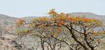 Tree - Public Domain Pictures