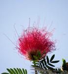 Flower - Public Domain Pictures