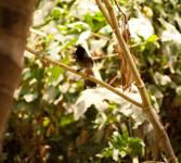 Birds Bulbul - Public Domain Pictures