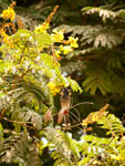 Bulbul Branch Bird - Public Domain Pictures