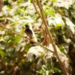 Bulbul Tree Branch - Public Domain Pictures