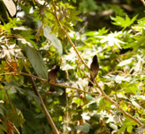Small Bird Tree Branch Bulbul - Public Domain Pictures