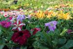 Beautiful Flower Garden - Public Domain Pictures