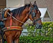 Horse Carriage - Public Domain Pictures