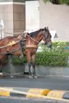 Horse - Public Domain Pictures