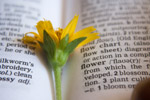 Flower Dictionary Word - Public Domain Pictures