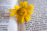 Flower Dictionary - Public Domain Pictures