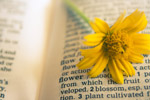 Flower In Dictionary - Public Domain Pictures