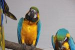 Blue And Yellow Macaw - Public Domain Pictures
