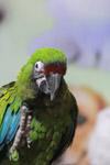 Green Parrot Bird Show - Public Domain Pictures