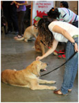 Caring Dog - Public Domain Pictures